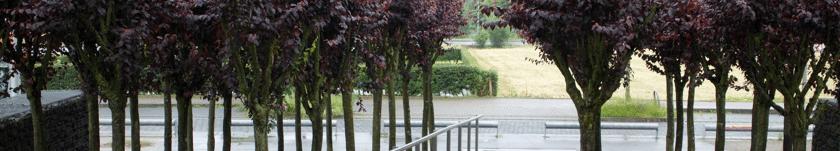 Rechtsanwalt Ferner Alsdorf - Foto  vom Steingarten im Annapark