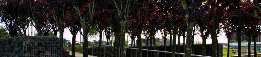 Rechtsanwalt Ferner Alsdorf - Foto  aus dem Annapark